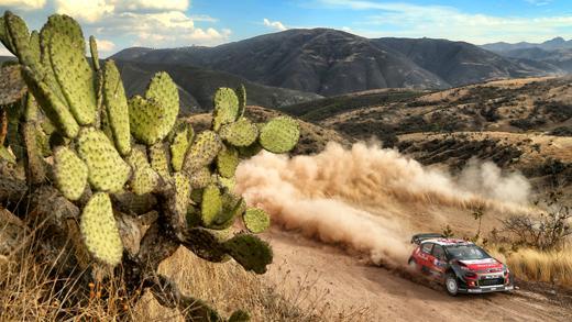 C3 WRC - Rencontre avec un cactus - Rallye du Mexique